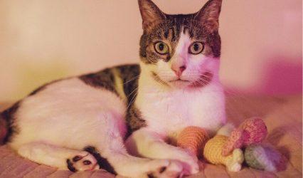 virtual-cat-portraits.jpeg