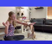 Eventos virtuales centrados en perros: el mejor día del perro