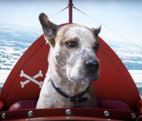 Anuncios tecnológicos para perros de ensueño: Find Your Joy de Microsort