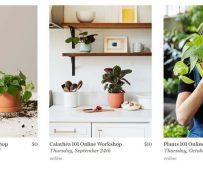 Talleres para minoristas con temática vegetal: talleres en línea