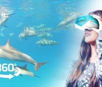 Experiencias VR Dolphin: nadar con delfines