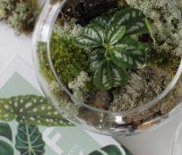 Talleres virtuales de plantas: el botánico urbano
