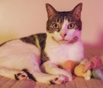 Retratos de gatos virtuales: retratos de gatos virtuales